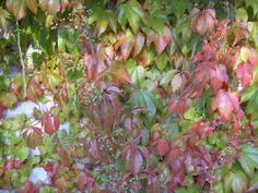 Buntes Herbstlaub   http://www.lebensfreude-wiederfinden24.de