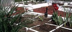 Article about square-foot gardening