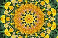 Yellow Flower Kaleidoscope