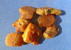 c4 Natural Cognac Honey Baltic Amber loose gems gemstones stone 7psc 11gr 55 TCW