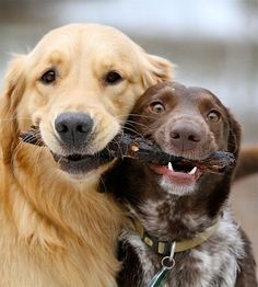 Two friends sharing equal credit for capturing a stick. | 50 Animal Pictures You Need To See Before You Die