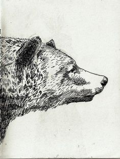 cross hatch bear: