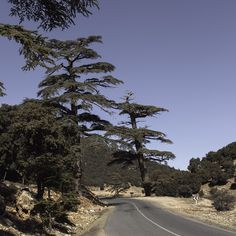 On the road to #Ifrane #maroc #morocco #travel #voyage #roadtrip #cedar #magazine #ipad #nowmaroc