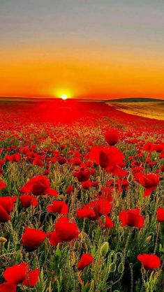 Poppies and Coreopsis Wallpaper Flowers Nature Wallpapers) – Funny Pictures Crazy Beautiful Landscapes, Beautiful Gardens, Beautiful Flowers, Beautiful World, Nature Pictures, Beautiful Pictures, Beautiful Sunrise, Nature Wallpaper, Amazing Nature