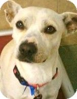 Super cute, super sweet, super submissive...TANNER wants to be your super star! ADOPT TANNER!!!