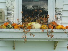 Fall window boxes. Pumpkins and bittersweet