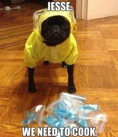 Breaking Bad dog costume. hahaha!