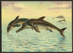 Ichthyosaurs in particular were giant marine reptiles that resembled fish and dolphins