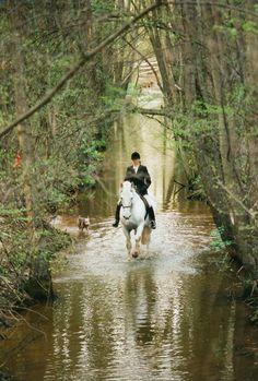 Generale Ariosa XLVIII-4, 17 hh Kladruber grey stallion. Owned & ridden by Petra Beltran.