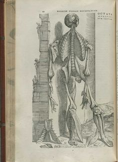 Vesalius, Andreas (1514-1564),De humani corporis fabrica libri septem, page 192. Vesalius's De corporis humani fabrica libri septem is one of the most influential medical texts ever printed, not only because of the scientific methods used to produce it, but because of the artistic renderings of the anatomist's findings. Although he relied heavily upon Galen, at times translating his words exactly, Vesalius performed his own careful dissections and observed the body in great ...