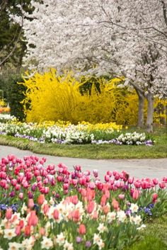 Spring is here.....many colorful flower varieties, including tulips, daffodils, Dutch iris and hyacinths, pansies, violas, poppies, forsythia and flowering trees... thousands of other spring blooming annuals and perennials are in full bloom or will be.