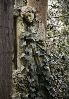 Abney Park Cemetery is one of the Magnificent Seven London cemeteries. Abney Park in Stoke Newington, in the London Borough of Hackney, is a historic parkland originally laid out in the early 18th century.