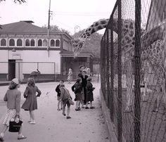 Belle_Vue_Zoo_Manchester_1958