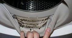 Voici une astuce maison pour enlever les moisissures toxiques et éliminer les odeurs désagréables de votre machine à laver.