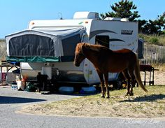 21 Rosemary Lane: Our Camping Getaway ~ Assateague Island