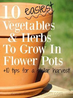 The 10 Easiest Vegetables and Herbs to Grow in Flower Pots. +10 Tips for a Stellar Harvest!