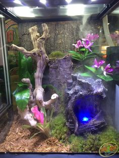 DIY this 12x12x18 Zoo Med Terrarium with Forest Floor Substrate, Frog Moss, Sand Blasted Grapevine, Naturalistic Flora Bird's Nest Fern, Cork Flats, and a ReptiRapids Small Wood LED Waterfall.