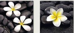Black stones and yellow puas ...