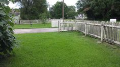 The rest of my front yard.