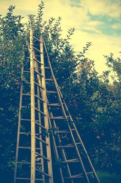 Apple Orchard Photograph  Michigan  Ladder by joystclaire on Etsy