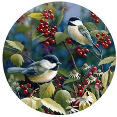 Chickadees on berry bush - Getting Ready by Bradley Jackson Paulette White - Nature Up Close Bird Pictures, Pictures To Paint, Pretty Birds, Beautiful Birds, Art Carte, Bird Artwork, Bird Paintings, Bird Illustration, China Painting