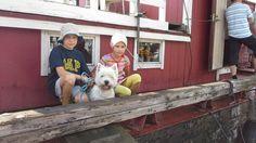 Wanhojen Laiwojen kesäregatta Leppävirralla. Onni Hila-laivan kannella. Hila, Dogs, Animals, Animales, Animaux, Pet Dogs, Doggies, Animal, Animais