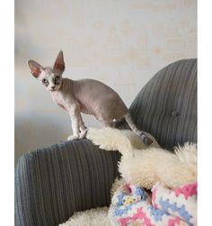 Hiro, Elisabeth Dunker's kitten, via Fine Little Day.