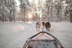 Husky Safari   Saariselkä Huskies   Kakslauttanen Arctic Resort   Saariselkä   Lapland   photography   travelling   blog story