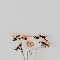 Nature is the most beautiful thing ever Watch Wallpaper, Cute Wallpaper Backgrounds, Flower Backgrounds, Cute Wallpapers, Scenery Wallpaper, Nature Aesthetic, Flower Aesthetic, Aesthetic Photo, Aesthetic Pictures