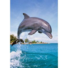 Castor - Delfinek Dolphin Painting, Bottlenose Dolphin, Cutest Dog Ever, Wild Ones, My Animal, Sea Creatures, Under The Sea, Beautiful Creatures, Animal Kingdom