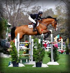 jumper // gorgeous horse, love this color bay where the mane and tail contrast