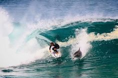 Australian professional surfer, Soli Bailey, upstaged by playful dolphin.