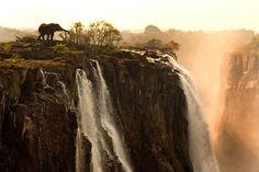 Elephant at Victoria Falls