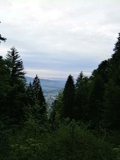 Hiking_wandern: Rheintal - Vorarlberg / Austria   Foto @Tschola