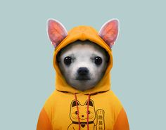 PETS – ANIMAL LOVERS #mascotas #perros #pets #cat #cats #dogs #dog #love #cute #animals #puppy #animallovers