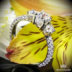 """Elegantly adorned curves await you with the """"Rounded Pave"""" 3 Stone Engagement Ring. This gorgeous design shimmers with 74 A CUT ABOVE® Hearts and Arrows Diamond Melee which includes the two 0.25ct side diamonds (1.05ctw; F/G VS)."""