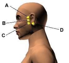 oil for ear ache 8 Potent Acupressure Points for Earache Treatment This is an important acupressure point for the treatment of ear pains that were popular in ancient times. Ear Acupressure Points, Acupuncture Points, Acupressure Therapy, Reiki, Migraine, Ayurveda, Massage, Human Body, Tips