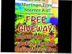 MORINGA KIT FREE GIVEAWAY! Subscribe to our youtube page and Leave us a Comment here so we know you Subscribe.Ends Feb 29th How to Grow a Moringa Tree: The Ultimate Study Guide to Assist, Establish, and Perfect the Art to Cultivating a Blessing. @ http://www.HealingMoringaTree.com or on http://www.amazon.com/How-grow-Moringa-Tree-cultivating/dp/149485144X/ref=sr_1_3?ie=UTF8&qid=1391406020&sr=8-3&keywords=moringa+books
