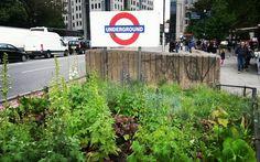#underground #londonunderground #london #tube #urbangarden #graffiti #garden #towerhill by modac68