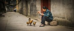Feeding Chooks in Feng Huang from #treyratcliff at www.StuckInCustoms.com - all images Creative Commons Noncommercial