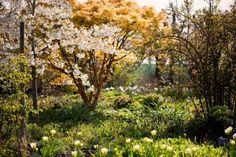Merriments Gardens - Home