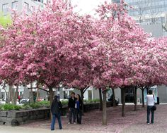 Yorkville Park  by canmark, via Flickr