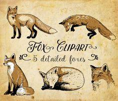 Hand Drawn Foxes Clip Art Fox clipart Digital by CorvusAttic