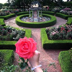 You have to go check out the Furman University Rose Garden! It's spectacular! By @brittanyj336 // yeahTHATgreenville
