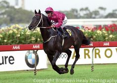 Octagonal!!!  2004 George Ryder Day.  His son Lonhro won the race, and the Inghams agreed to bring his sire out on Golden Slipper Day to parade.  Darren Gauci rode Occy.  What other horse, as a serving stallion, would have agreed to this??  Slipper day crowds?  He'd owned Slipper Day in 1996 and 1997.  It was great theatre!!!!