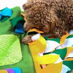 IFOYO Dog Feeding Mat Dog Snuffle Mat Small Dog Training Pad Pet Nose Work Blanket Non Slip Pet Activity Mat for Foraging Skill Stress Release S Green * To view further for this item, visit the image link. (This is an affiliate link) Dog Training Pads, Training Your Dog, Large Dogs, Small Dogs, Dog Puzzles, Pet Dogs, Pets, Activity Mat, Release Stress
