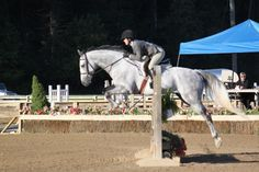 Tonsina, adopted in 2011 from @NewVocations, showing in the Hunter Ring. www.horseadoption.com