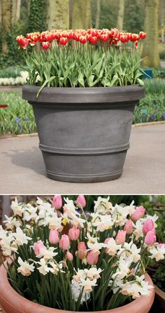 101 Gardening: Do this in the fall. Spring bulbs in Pots