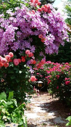 Pink Roses and purple Clematis...