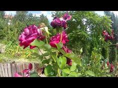 YouTube Youtube, Plants, Plant, Youtubers, Youtube Movies, Planets